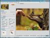 Mosaizer Pro Screenshot2